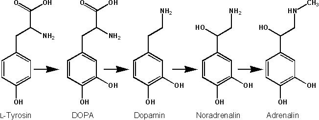 suplementación tirosina